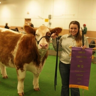 Paige Grand Champion Steer Gaines County Show (1)