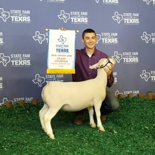 Sam Sylvester, krum texas, Grand Champion white dorper ewe State Fair