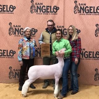 bailee sanchez SA show Breed Champ wether dam