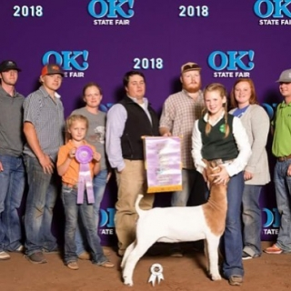 kenna gay green reserve grand champion oklahoma state fair