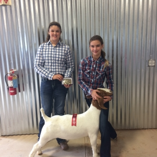 lauren smith, Brrandon Evans breeder, Grand Champion Goat Battle on the Brazos, 2nd place